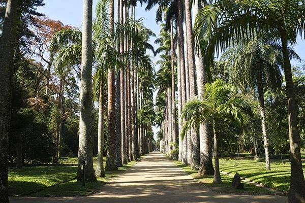 Passeio para familia no jardim botânico no Rio de Janeiro